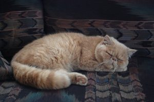 cat_sleeping